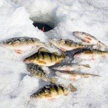 Узнайте точно, к чему снится замороженная рыба!