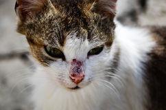 Фото К чему снится раненый кот в крови