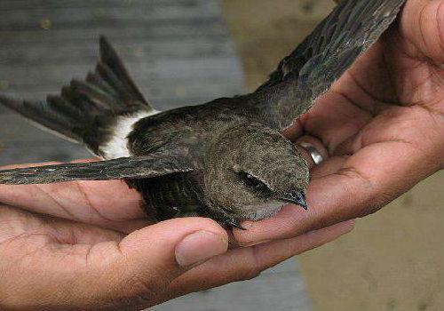 к чему снится птица в рука