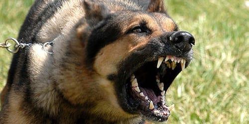 Фото Сонник собака кусает за шею