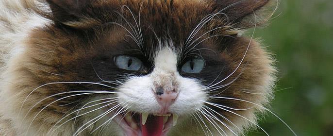 К чему снится кошка съела котенка фото