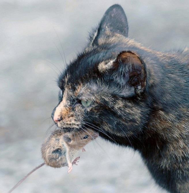 Если во сне кошка поймала мышь - у вас в окружении нехорошие люди