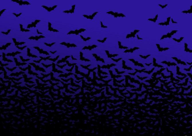 Много летучих мышей - к серьезным неприятностям