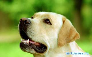 Фото Оскал собаки сонник