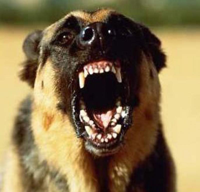 Оскал собаки сонник фото