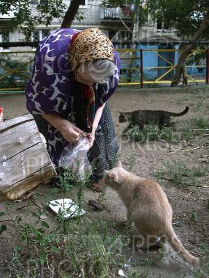 К чему снится кормить котят женщине