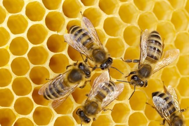 К чему снятся мертвые пчелы фото