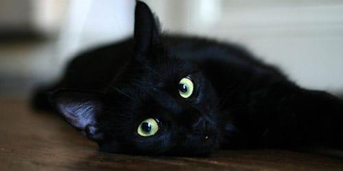 заболевшая черная кошка