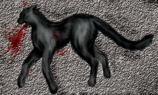 Черная кошка в крови