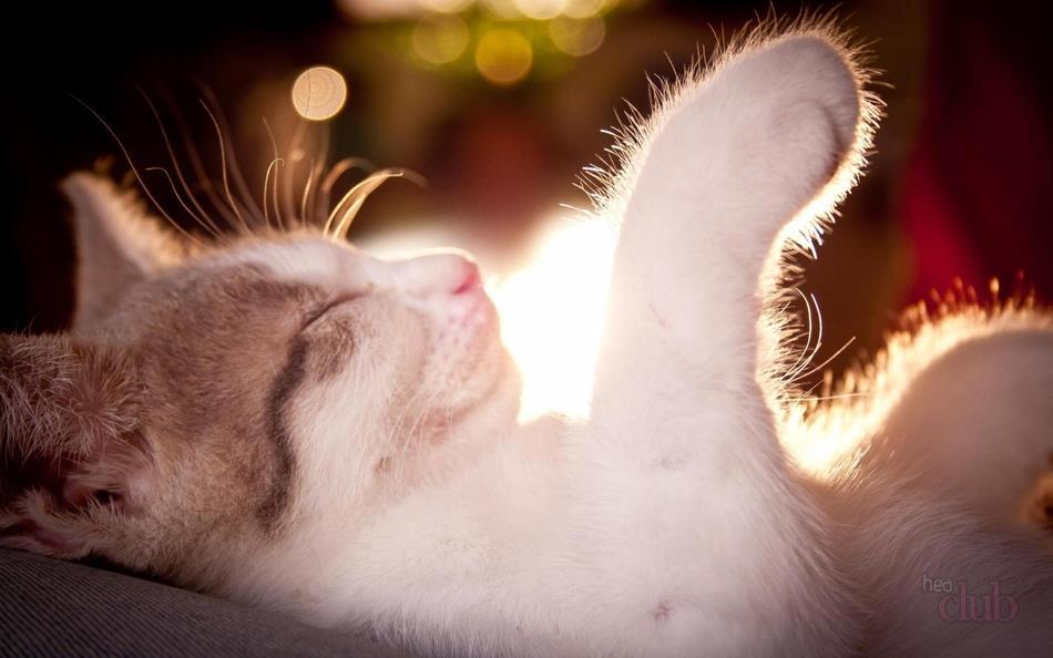 Хорошие сны про кошку