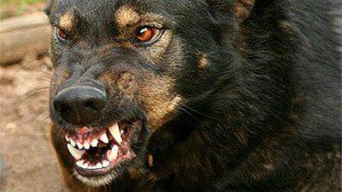 черная злая собака