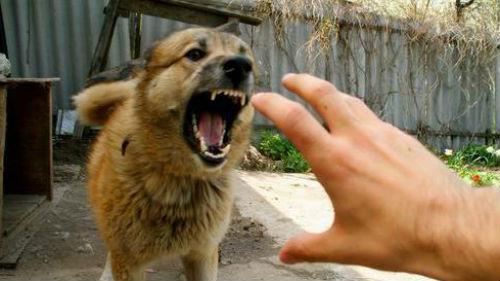 злая собака на цепи
