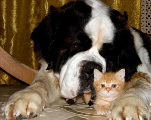 Фото Сонник большая собака ластится