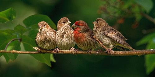 видеть во сне птиц на дереве