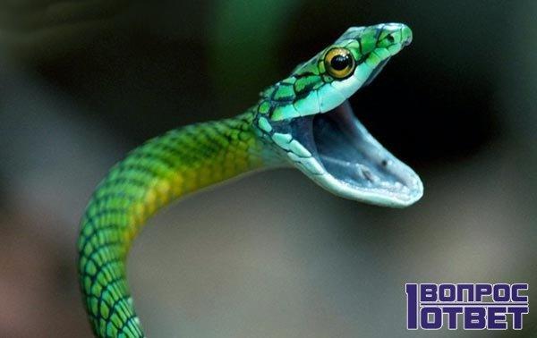 Приснилась змея беременной женщине фото