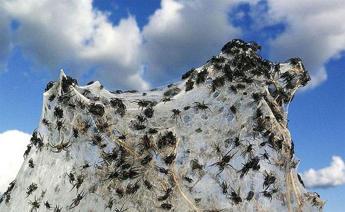 Сонник: к чему снятся пауки: большие, черные, маленькие, белые