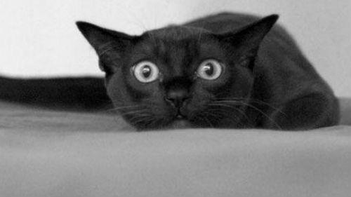 Черная кошка которая нападает в доме или крватире.