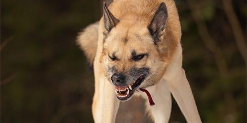 Фото Сонник к чему снится нападающая собака