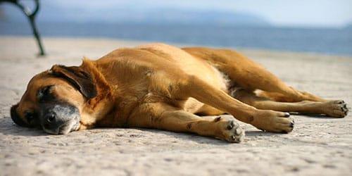 видеть во сне умирающую собаку