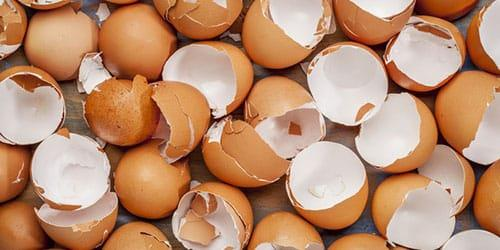 много разбитых яиц
