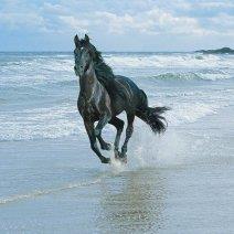 К чему снится конь черной масти?