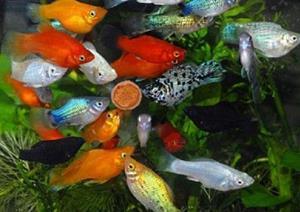 Много разных рыбок в аквариуме