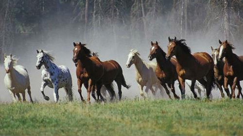 видеть табун бегущих лошадей