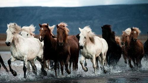 к чему снится табун лошадей женщине