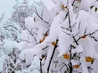 k-chemu-snitsya-sneg
