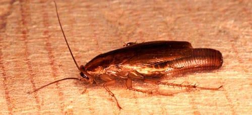 Фото К чему снится давить тараканов во сне