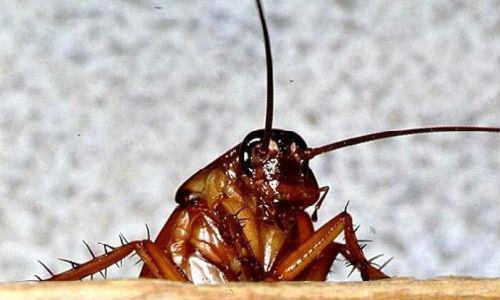 К чему снится давить тараканов во сне фото