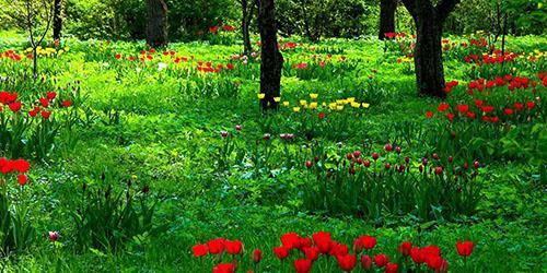 видеть во сне поляну с цветами