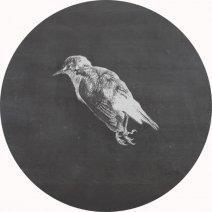 К чему снится мертвый голубь: толкование сновидения