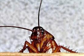 07-Снятся тараканы1