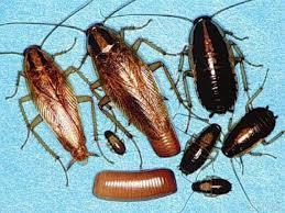 07-Снятся тараканы2