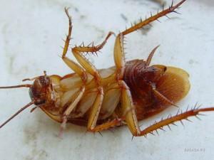 07-Снятся тараканы3