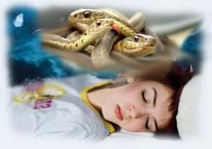 К чему снятся змеи женщине, мужчине. Сонник - толкование змей