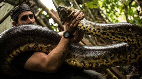К чему снится душить змею фото
