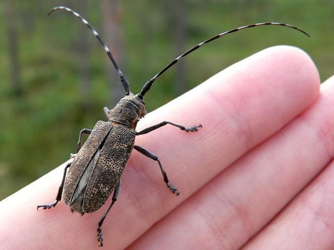 Фото К чему снится ловить жука