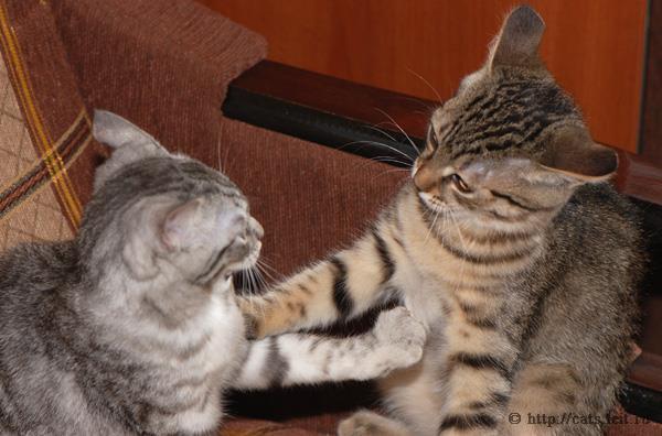 К чему снится что дерутся котята фото