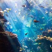 Сон аквариумные рыбки