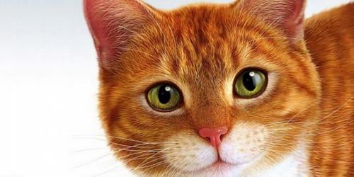 Кот выпрыгнул в окно сонник