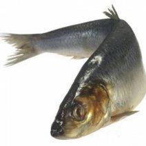 К чему снится сырая рыба: толкование для женщин и мужчин