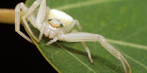 маленький паук