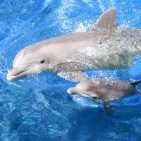 к чему снится гладить дельфина