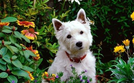 Фото Сонник собака облезлая
