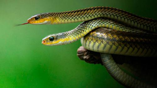 маленькие зеленые змеи во сне