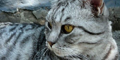 К чему снится потерять кошку фото