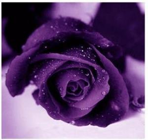 Сонник. Приснился фиолетовый цветок