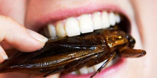 есть таракана